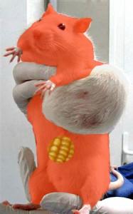 rat-RobinDesBois-2012