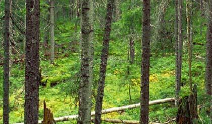40_finland_forest_sites-pollues-arctiques_robin-des-bois