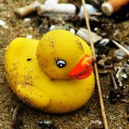 La chasse aux Duck Race est ouverte