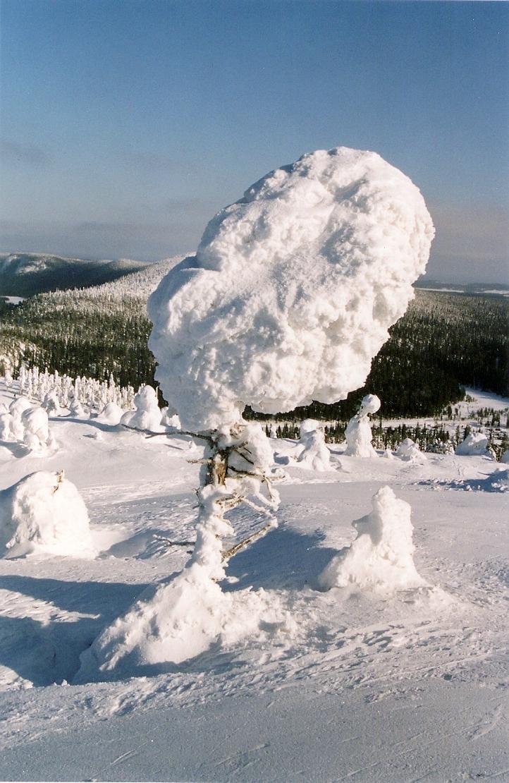 arctic-robindesbois-2008