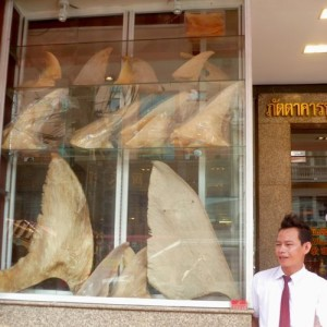 Bangkok-requin-robindesbois1-2013