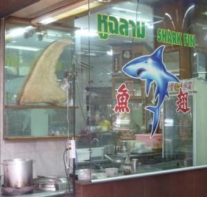 Bangkok-requin2-robindesbois-2013