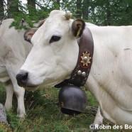 (Français) Les vaches et les radiateurs électriques