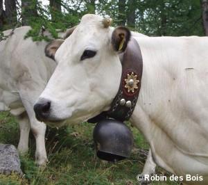 Vache2-RobinDesBois-2009