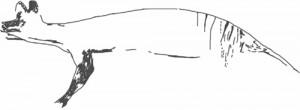 dessin-thylacine2-RobinDesBois-2013
