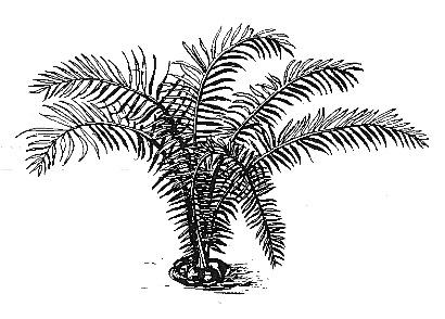ivoire-vegetal-robindesbois1986