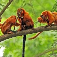 Vol de 17 singes au zoo de Beauval