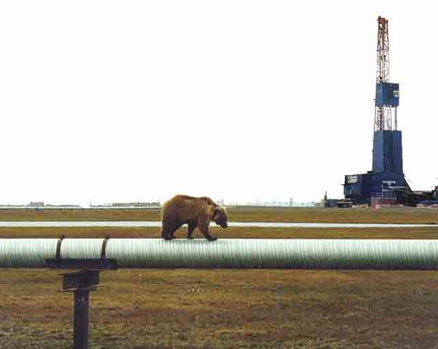 09_bearonipeline1_sites-pollues-arctiques_robin-des-bois