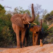 L'internationale des fossoyeurs d'éléphants et de rhinocéros en procès à Rennes