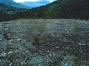sari-dorcino-rehabilitee-photo1-RobindesBois