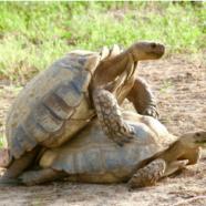 Record turtle seizure in Burkina Faso