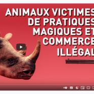 (Français) Animaux victimes de pratiques magiques et commerce illégal