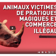 Animaux victimes de pratiques magiques et commerce illégal