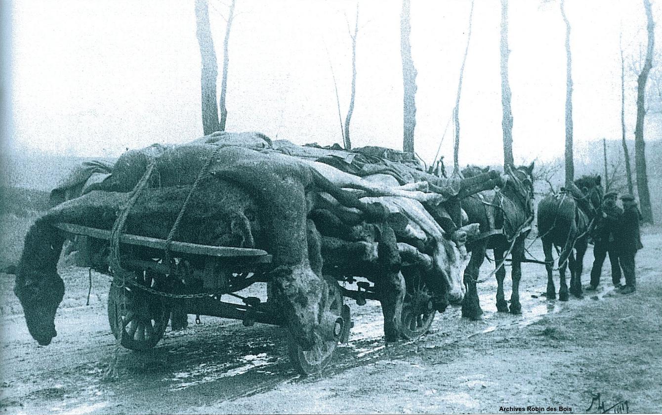 Les animaux et la Première Guerre Mondiale | Robin des Bois
