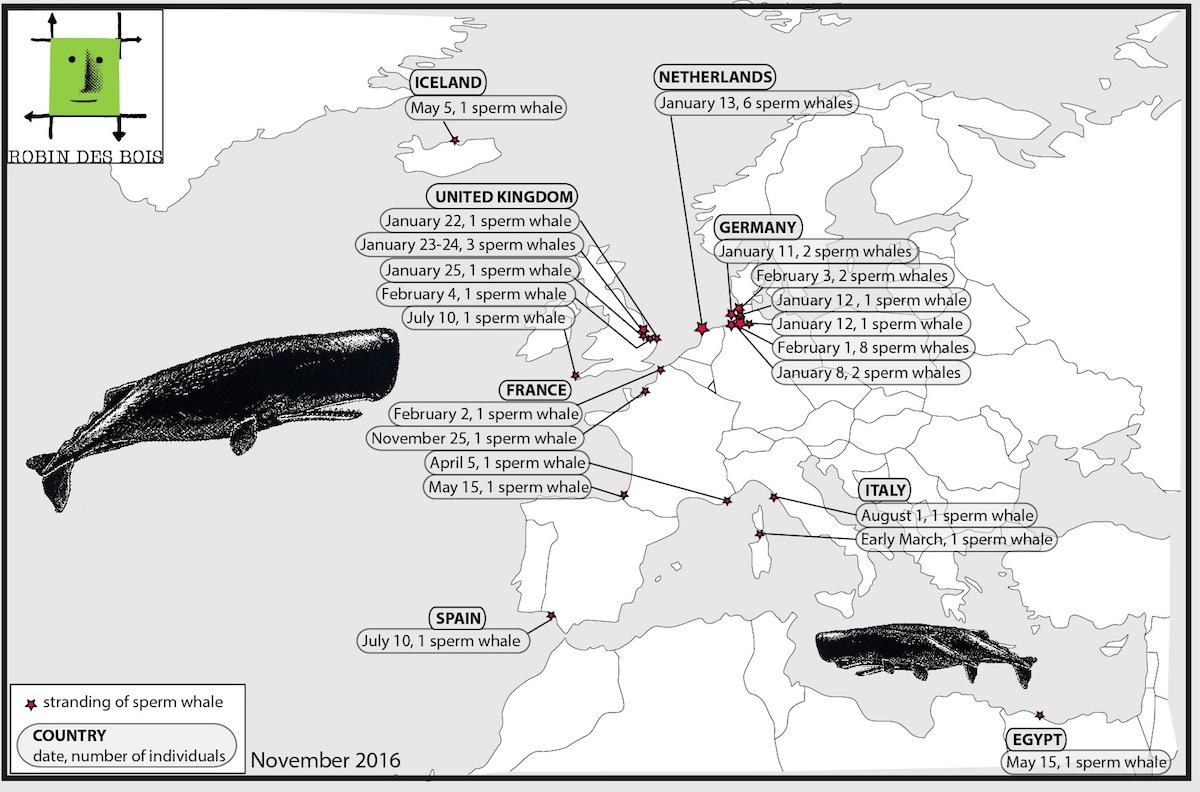 stranding-sperm-whaleRobindesBois